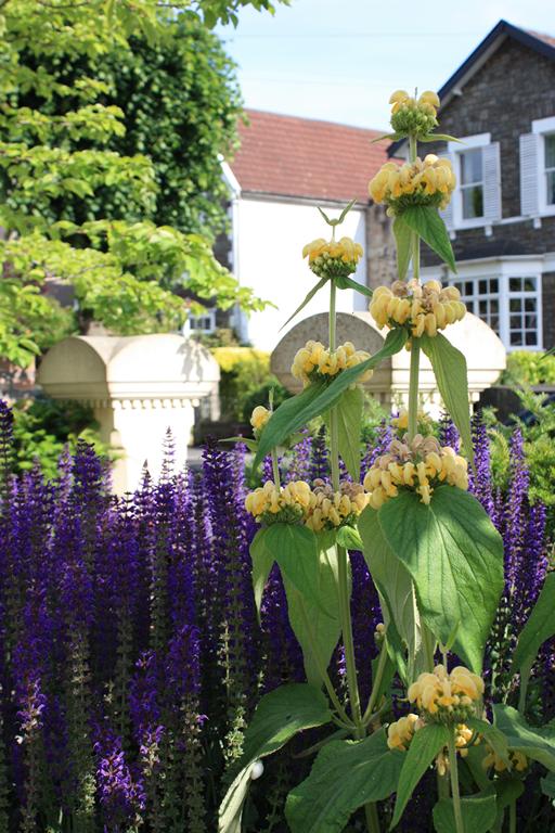 Front Garden Design, Bristol - Blueprint Landscape Design